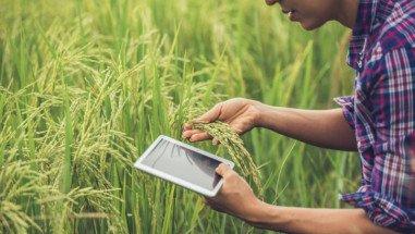 bagaimana-cara-hitung-zakat-pertanian-pompanisasi